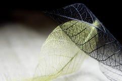 Hojas de la fantasía del otoño foto de archivo libre de regalías