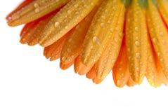 Hojas de la flor aisladas imagen de archivo libre de regalías