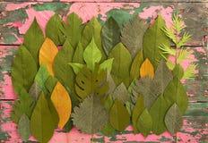 Hojas de la flor de papel Foto de archivo libre de regalías