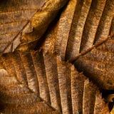 Hojas de la haya en otoño Imagen de archivo libre de regalías