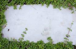 Hojas de la hiedra en el piso del ladrillo Foto de archivo libre de regalías