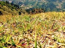 Hojas de la hierba Fotografía de archivo libre de regalías