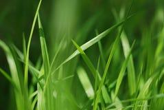 Hojas de la hierba Imagen de archivo libre de regalías