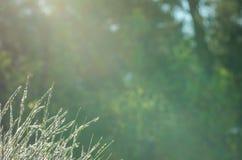 Hojas de la hierba contra fondo verde fotografía de archivo libre de regalías