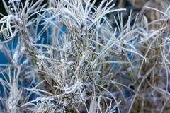 Hojas de la hierba cubiertas con nieve Fotos de archivo libres de regalías