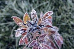 Hojas de la hierba cubiertas con nieve imagenes de archivo