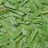 Hojas de la hierba de la citronela Fotos de archivo