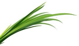 Hojas de la hierba verde foto de archivo