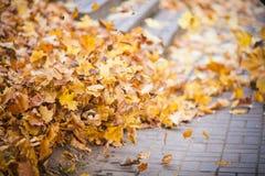 Hojas de la naranja del otoño foto de archivo libre de regalías