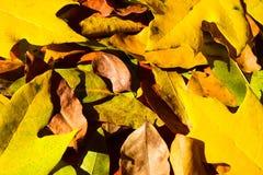 Hojas de la naranja del otoño del grupo del fondo outdoor Fotos de archivo