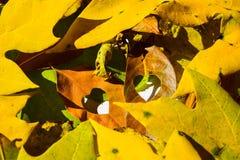 Hojas de la naranja del otoño del grupo del fondo outdoor Fotografía de archivo