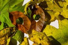 Hojas de la naranja del otoño del grupo del fondo outdoor Imagen de archivo libre de regalías