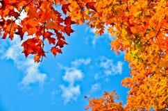 Hojas de la naranja del otoño y cielo azul fotos de archivo