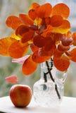 Hojas de la naranja del otoño y manzana roja Imagenes de archivo