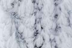 Hojas de la nieve Imágenes de archivo libres de regalías