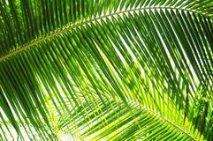 Hojas de la palmera Imagenes de archivo
