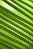 Hojas de la palmera Imagen de archivo