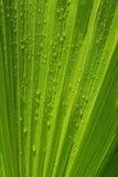 Hojas de la palmera Fotografía de archivo