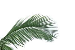 Hojas de la palmera Foto de archivo libre de regalías