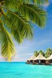 Hojas de la palmera del coco sobre el océano con las casas de planta baja Imagen de archivo libre de regalías