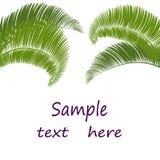 Hojas de la palmera en el fondo blanco Ilustración Foto de archivo
