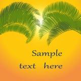 Hojas de la palmera en fondo anaranjado Ilustración Imagen de archivo