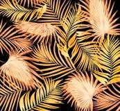 Hojas de la palmera en negro imagenes de archivo