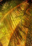 Hojas de la palmera - la vendimia labró el cuadro Fotografía de archivo
