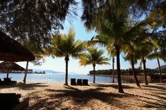 Hojas de la palmera sobre la playa de lujo Concepto de las vacaciones de verano imágenes de archivo libres de regalías