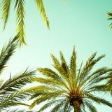 Hojas de la palmera y de palma del vintage contra el cielo Foto de archivo