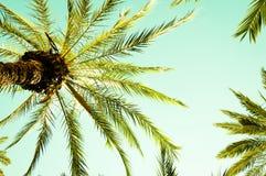 Hojas de la palmera y de palma del vintage contra el cielo Fotos de archivo