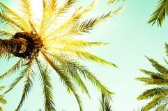 Hojas de la palmera y de palma del vintage contra el cielo Imagen de archivo
