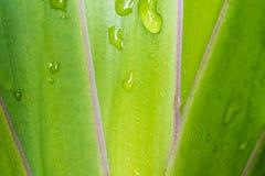 Hojas de la planta ornamental como fondo Imágenes de archivo libres de regalías