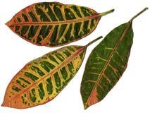 Hojas de la planta tropical imágenes de archivo libres de regalías