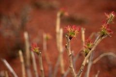 Hojas de la primavera Foto de archivo