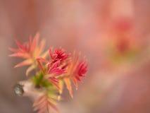 Hojas de la primavera Imagenes de archivo