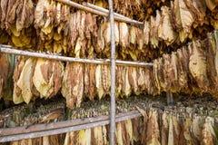 Hojas de la sequedad del tabaco en la vertiente Imágenes de archivo libres de regalías