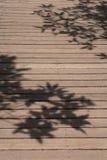 Hojas de la sombra Imagenes de archivo