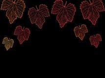 Hojas de la uva Foto de archivo libre de regalías