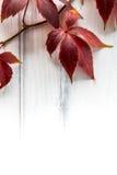 Hojas de la uva Fotografía de archivo