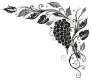 Hojas de la vid, uvas libre illustration