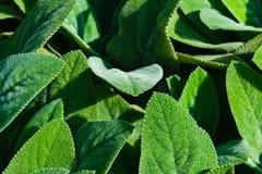 Hojas de las plantas verdes Imagen de archivo libre de regalías
