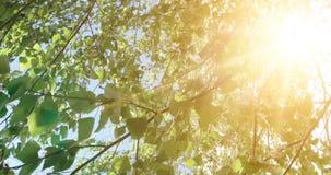 Hojas de los árboles Cantidad de madera verde de la luz del sol de la naturaleza Hola concepto del verano metrajes