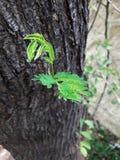 hojas de los árboles de la planta imagen de archivo