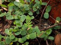 hojas de los árboles de la planta foto de archivo libre de regalías