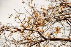 Hojas de los árboles del otoño en color del vintage Fotos de archivo libres de regalías