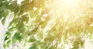 Hojas de los árboles forestales Cantidad de madera verde de la luz del sol de la naturaleza Hola verano almacen de video