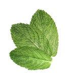3 hojas de menta aisladas en el fondo blanco Foto de archivo libre de regalías