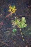 Hojas de muerte en el suelo Imagen de archivo libre de regalías