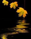 Hojas de oro del otoño Imagen de archivo libre de regalías